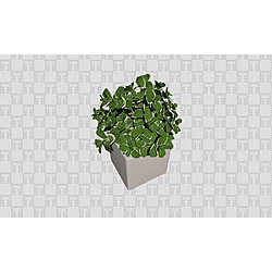 Mint Plant - Collection Generic Accessories by Tilelook | Tilelook