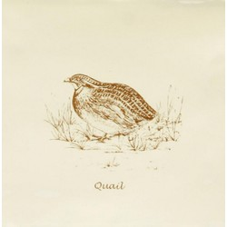 Quail Sepia On Papyrus 13x13 cm The Winchester Tile Company Residence